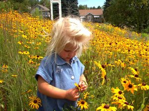 Photo of 3 year old Sylvie in prairie garden looking at black-eyed susan